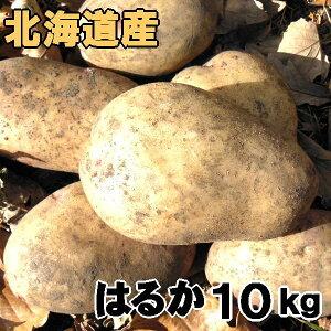 送料無料 越冬じゃがいも はるか 10kg 北海道産 ジャガイモ 産地直送
