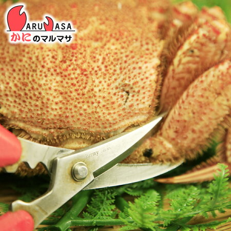 お歳暮ギフトカニ専用蟹鋏(かにはさみ)毛がに/タラバガニ/花咲ガニ/ズワイガニの調理に最適!