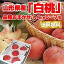 【送料無料】【ギフト】山形産「白桃」品種おまかせ1.4kg(5-7玉) 【前払い不可】 山形 白桃 はくとう 桃 もも お試し …