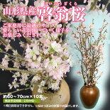 山形県産「啓翁桜」60-70cm×10本(スプレー状)