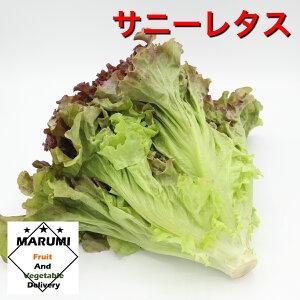 サニーレタス1束【セット野菜...