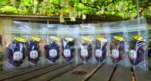 セミドライぶどう(半生干しぶどう)5袋セット【シャインマスカット、巨峰、ロザリオロッソ、ナガノパープル、伊豆錦、ジャスミン、シナノスマイルより5品種】