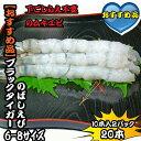 ブラックタイガーえび のばしえび 6-8サイズ 2パック20本 【伸ばし海老】532P17Sep16
