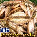 【ほっこり旨い】兵庫香住産 豆ハタハタ 1kg<はたはた>【業務用】