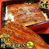 テキストOK特大(無頭)3尾セット送料無料4980円【うなぎの蒲焼きひつまぶしウナギ鰻】