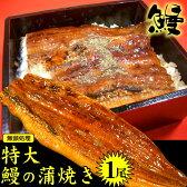 テキストOK特大(無頭)1尾【うなぎの蒲焼きひつまぶしウナギ鰻】