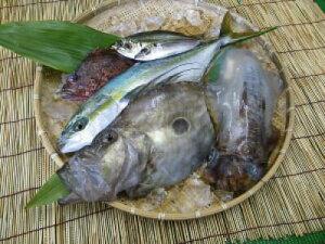 【定期購入】1か月分の商品が無料!五島列島の季節のお魚セット【5,000円×12ヶ月コース】【送料無料】【smtb-ms】