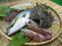 【定期購入】1か月分の商品が無料!五島列島の季節のお魚セット【4,000円×12ヶ月コース】【送料無料】【smtb-ms】