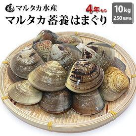 【送料無料】【業務用】大人買い蓄養はまぐり 4年もの5cm〜6cmサイズ蛤(ハマグリ)10kg(250粒前後)入♯貝 はまぐり ハマグリ 蛤 バーベキュー 海鮮 海鮮バーベキュー 直送