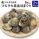 【送料無料】蓄養はまぐり 5年もの5cm〜6cmサイズ蛤(ハマグリ)2kg(40粒前後)入♯貝 はまぐり ハマグリ 蛤 バーベキ…