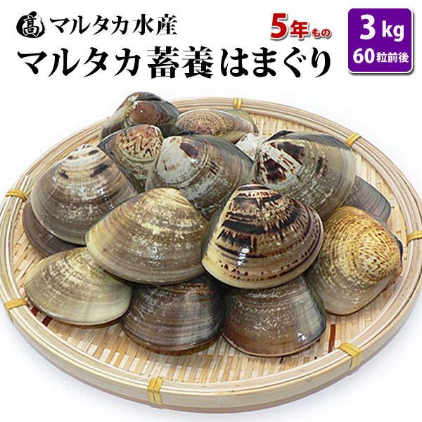 【送料無料】蓄養はまぐり 5年もの5cm〜6cmサイズ蛤(ハマグリ)3kg(60粒前後)入♯貝 はまぐり ハマグリ 蛤 バーベキュー 海鮮 海鮮バーベキュー 直送