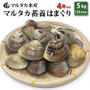 【送料無料】【業務用】大人買い蓄養はまぐり 4年もの5cm〜6cmサイズ蛤(ハマグリ)5kg(125粒前後)入♯貝 はまぐり ハ…