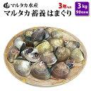 【送料無料】蓄養はまぐり 3年もの4cm〜5cmサイズ蛤(ハマグリ)3kg(90粒前後)入♯貝 はまぐり ハマグリ 蛤 バーベキ…