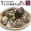 【送料無料】蓄養大はまぐり 8年もの6cm〜8cmサイズ蛤(ハマグリ)1kg(13粒前後)入♯貝 はまぐり ハマグリ 蛤 バーベ…