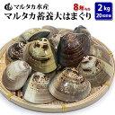 【送料無料】蓄養大はまぐり 8年もの6cm〜8cmサイズ蛤(ハマグリ)2kg(20粒前後)入♯はまぐり ハマグリ 蛤 バーベキ…