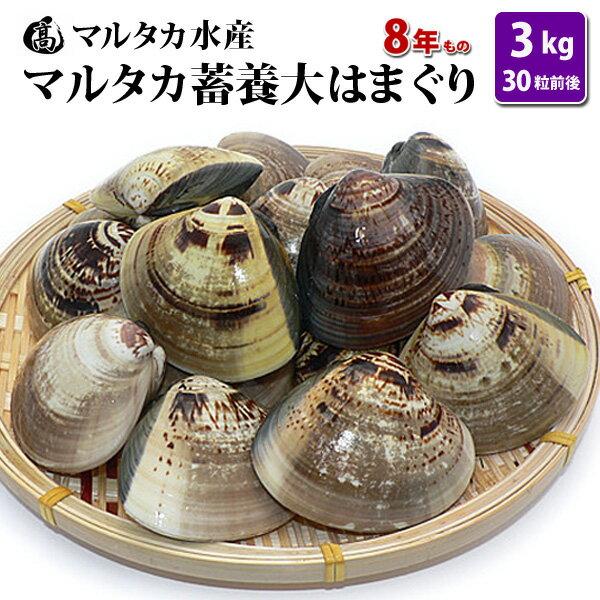 【送料無料】 蓄養大はまぐり 8年もの6cm〜8cmサイズ蛤(ハマグリ)3kg(30粒前後)入♯貝 はまぐり ハマグリ 蛤 バーベキュー 海鮮 海鮮バーベキュー 直送 特大