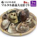 【送料無料】 蓄養大はまぐり 8年もの6cm〜8cmサイズ蛤(ハマグリ)3kg(30粒前後)入♯貝 はまぐり ハマグリ 蛤 バー…