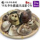 【送料無料】 蓄養大はまぐり 8年もの6cm〜8cmサイズ蛤(ハマグリ)3kg(39粒前後)入♯貝 はまぐり ハマグリ 蛤 バー…