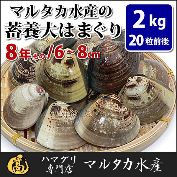 【送料無料】蓄養はまぐり 8年もの6cm〜8cmサイズ蛤(ハマグリ)2kg(20粒前後)入♯はまぐり ハマグリ 蛤 バーベキュー 海鮮 海鮮バーベキュー 直送 特大 貝