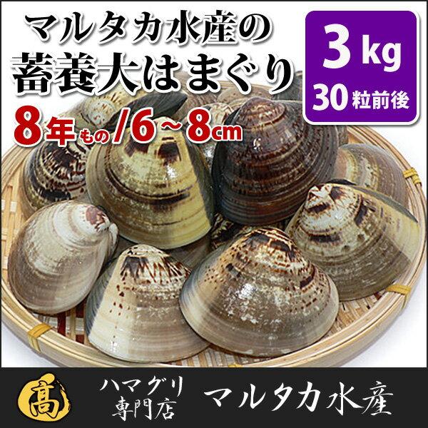 【送料無料】 蓄養はまぐり 8年もの6cm〜8cmサイズ蛤(ハマグリ)3kg(30粒前後)入♯貝 はまぐり ハマグリ 蛤 バーベキュー 海鮮 海鮮バーベキュー 直送 特大