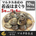 【送料無料】【業務用】大人買い蓄養はまぐり 5年もの5cm〜6cmサイズ蛤(ハマグリ)10kg(200粒前後)入【バーベキュー】【BBQ】【海鮮】