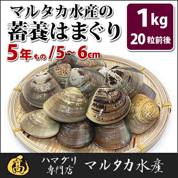 【送料無料】蓄養はまぐり 5年もの5cm〜6cmサイズ蛤(ハマグリ)1kg(20粒前後)入♯バーベキュー 海鮮焼き 海鮮バーベキュー ひな祭り 活はまぐり 直送はまぐり