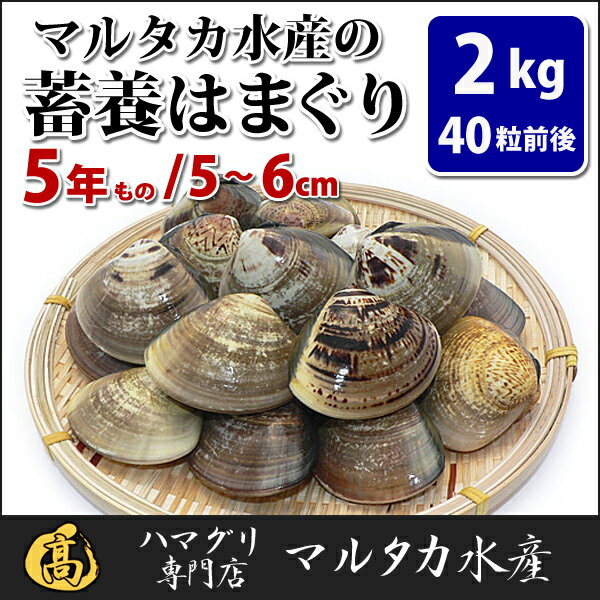 【送料無料】蓄養はまぐり 5年もの5cm〜6cmサイズ蛤(ハマグリ)2kg(40粒前後)入♯バーベキュー 海鮮焼き 海鮮バーベキュー ひな祭り 活はまぐり 直送はまぐり