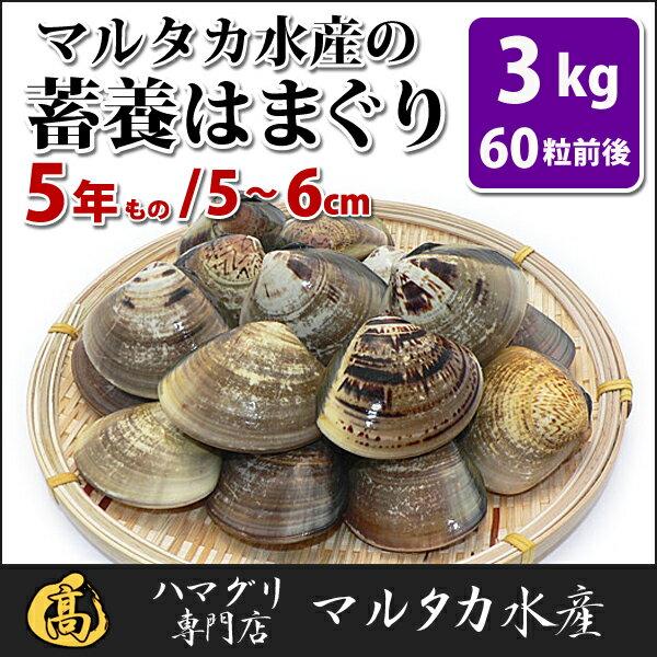 【送料無料】蓄養はまぐり 5年もの5cm〜6cmサイズ蛤(ハマグリ)3kg(60粒前後)入♯バーベキュー 海鮮焼き 海鮮バーベキュー ひな祭り 活はまぐり 直送はまぐり