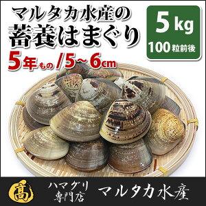 【送料無料】【業務用】大人買い蓄養はまぐり5年もの5cm〜6cmサイズ蛤(ハマグリ)5kg(100粒前後)入