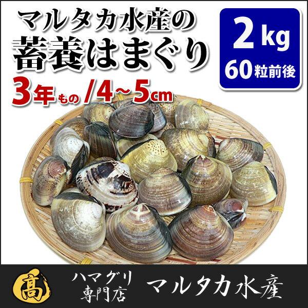 【送料無料】蓄養はまぐり 3年もの4cm〜5cmサイズ蛤(ハマグリ)2kg(60粒前後)入♯バーベキュー 海鮮焼き 海鮮バーベキュー ひな祭り 活はまぐり 直送はまぐり