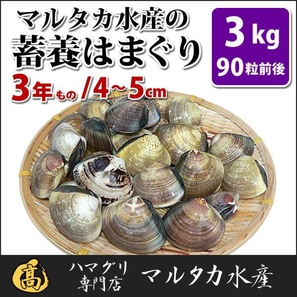 【送料無料】蓄養はまぐり 3年もの4cm〜5cmサイズ蛤(ハマグリ)3kg(90粒前後)入♯バーベキュー 海鮮焼き 海鮮バーベキュー ひな祭り 活はまぐり 直送はまぐり