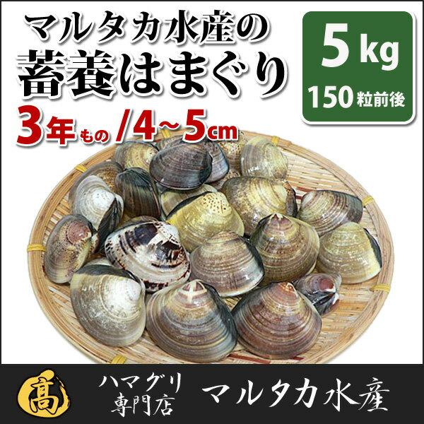 【送料無料】【業務用】大人買い蓄養はまぐり 3年もの4cm〜5cmサイズ蛤(ハマグリ)5kg(150粒前後)入♯バーベキュー 海鮮焼き 海鮮バーベキュー ひな祭り 活はまぐり 直送はまぐり