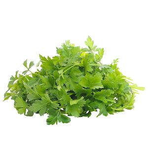 国産 フレッシュイタリアンパセリ 100g / Italian parsley, Fresh, 100g