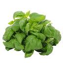 -栽培期間中農薬不使用-千葉県産フレッシュバジル500g