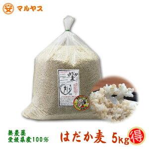 愛媛県産_無農薬 はだか麦_5kg【お徳用】もち麦同様,水溶性食物繊維が豊富な裸麦 大麦の上質種