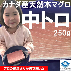 【新商品】 まぐろ マグロ 鮪 カナダ産 天然 本鮪 中トロ 1柵 約250g ギフト条件付き送料無料