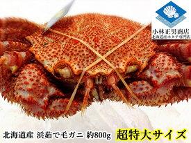 毛ガニ 毛がに 毛蟹 北海道産 浜茹で毛ガニ 1杯約800g 超特大サイズ 最上級品 堅ガニ ギフト