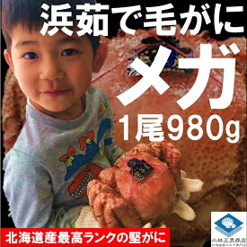 毛ガニ 毛がに 毛蟹 北海道産 浜茹で毛ガニ 1杯約980g メガサイズ 最上級品 堅ガニ ギフト