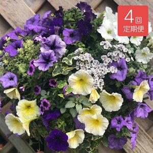 【送料無料】 【花の定期便】季節のおまかせ  寄せ植え ハンギングバスケット 年4回 定期便
