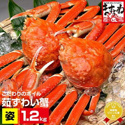 ボイルずわい蟹/姿1.2kg仕立て(600g前後×2匹)[送料無料](2-3人前)