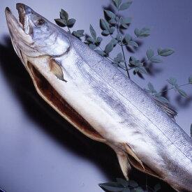 塩引き鮭1本物 約 3.5kg 新潟村上