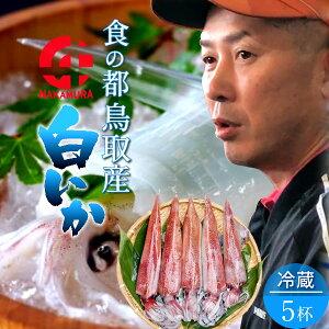 いか 白イカ 白いか 生 鳥取県産 烏賊 剣先イカ ケンサキイカ イカの女王 [5杯・約1.4kg] BBQ お刺身 詰め合わせ イカソーメン いかさし いか焼き 生食用 朝どれ 日本海 山陰沖 活きがいい 季節