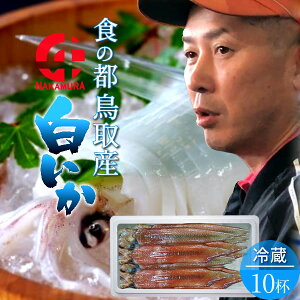 いか 白イカ 白いか 生 鳥取県産 烏賊 剣先イカ ケンサキイカ イカの女王 [約2.7kg×10杯] BBQ お刺身 詰め合わせ イカソーメン いかさし いか焼き 生食用 朝どれ 日本海 山陰沖 活きがいい 季節