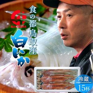 いか 白イカ 白いか 生 鳥取県産 烏賊 剣先イカ ケンサキイカ イカの女王 [約4.0kg×15杯] BBQ お刺身 詰め合わせ イカソーメン いかさし いか焼き 生食用 朝どれ 日本海 山陰沖 活きがいい 季節