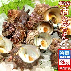 サザエ 天然活さざえ 2kg【20個前後】鳥取県 海の幸 日本海 お刺身 壺焼き BBQバーベキュー 【送料無料】