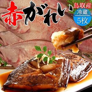赤ガレイ カレイ 鰈 約2.3kg(5枚) 赤かれい 加熱用 特大 魚 生 鮮魚 鳥取県 山陰沖産 ふるさと 季節 旬の魚 煮つけ フライ ムニエル 焼き魚 自家製干物 一夜干し ふっくら 高たんぱく 低脂肪 産