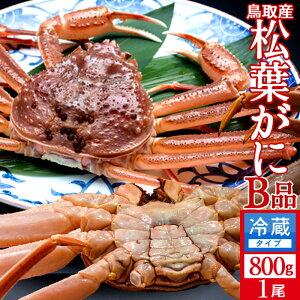 かに 訳あり 松葉がに[B品]特大800g 活ガニ 生き蟹 松葉蟹 鳥取県産 通販直送 マツバガニ わけあり 日本海ズワイガニ