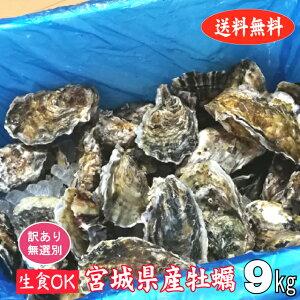 【訳あり】 殻付き牡蠣 産地直送 宮城県産 9kg 生食用 送料無料 活 かき 生ガキ