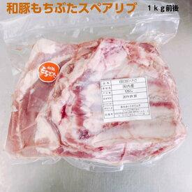 お盆営業中 あす楽対応 和豚もちぶた 骨付き スペアリブ ブロック BBQ バーベキュー キャンプ 煮込料理 数量限定 ブランド豚