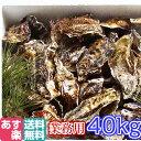 あす楽対応!牡蠣 業務用 地域限定 送料無料!40kg(約440粒)宮城県産 殻付き 牡蠣 殻付き 無選別牡蠣 牡蠣 殻付 カ…